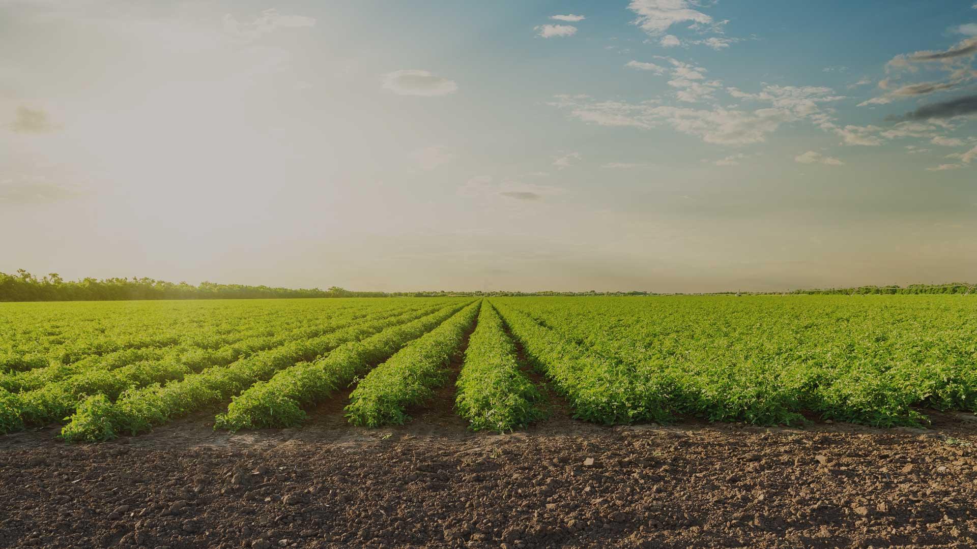 L'agricoltura biodinamica